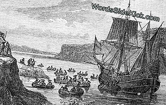Ny Nordamerika Viking Voyage Discovered