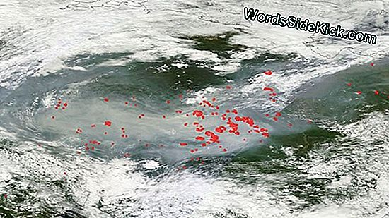 Arctic Wildfire Soot Darkening Greenland Ice Sheet