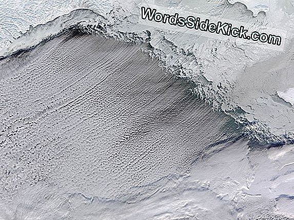 Bering Sea Ser Overraskende Record Ice Cover