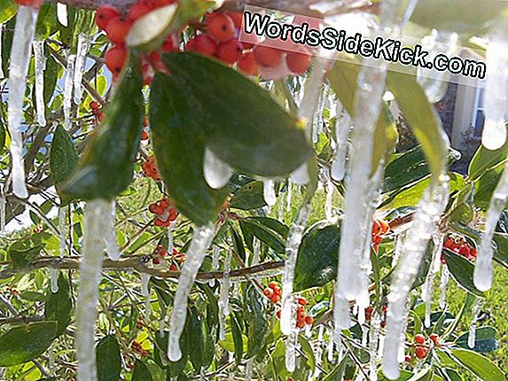 Florida Freeze Snaps Weather Records