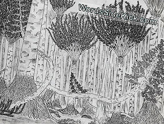 Giant Vines & Towering Trees: Ancient Forest Unearthed