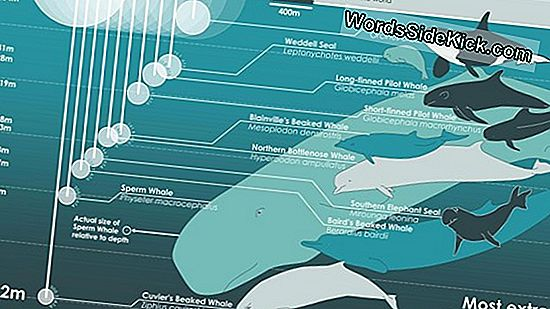 Into The Deep: James Cameron'S Mariana Trench Dive (Infographic)