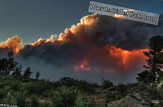Er Global Warming Fueling Colorado Wildfires?