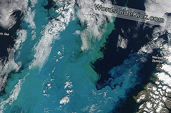 Plankton Bloom Farver Sea Off Russian Island