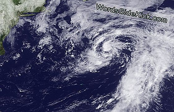 Potentielle Tropical Cyclone Looms Off East Coast