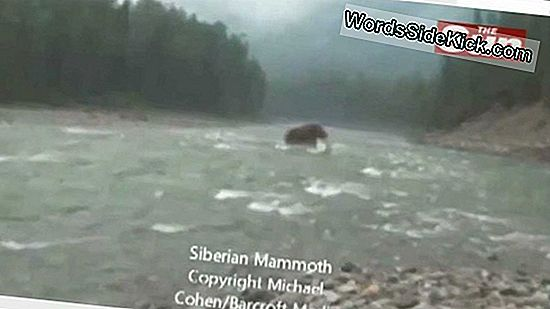 Woolly Mammoth Caught On Video?