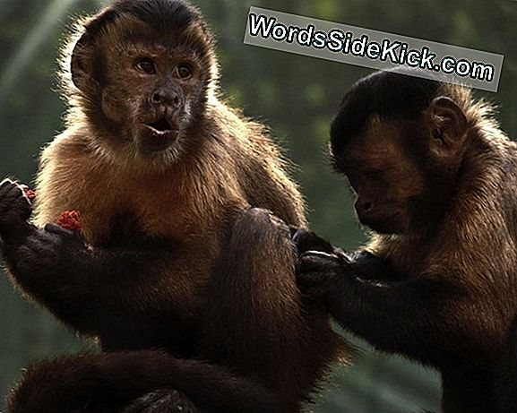 Monkeys Shun Selfish Andre