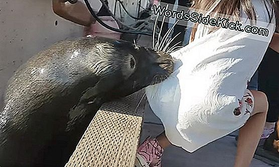 'Seal Finger' Worries Prompt Antibiotics After Sea Lion Attack
