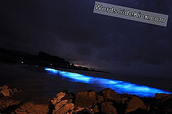 Ghostly Blue Glow I Tasmania Bay May Signal Trouble