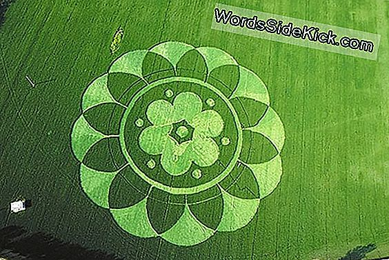 The Crop Circle Mystery: Et Nærmere Udseende