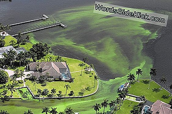 Gooey Green Slime Florida Waters On Super Gross - Ja Super Toxic