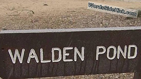 Stop Peeing I Walden Pond!