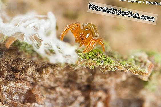 Golden Spiderlings Hatch Von Bizarre 'Silkhenge' In Amazing Video