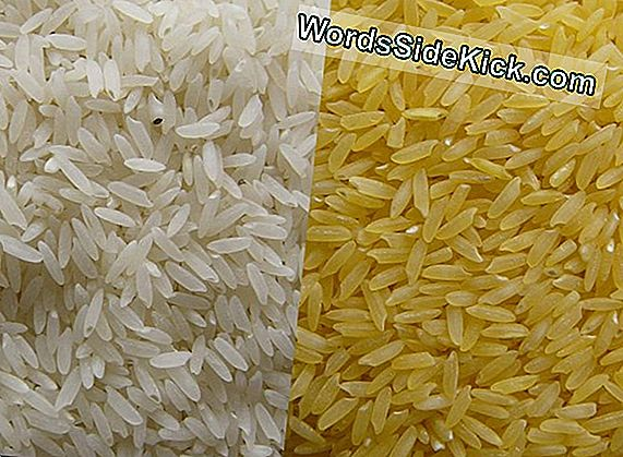 Arroz Genéticamente Modificado Combate Alergias