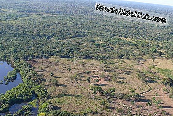 Misteriosos Anillos De Tierra Predate Amazon Rainforest