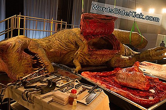 Conoce Al Guy Who Fake-Dissected A T. Rex