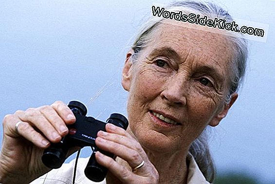 Por Qué Jane Goodall Cree En Bigfoot (Video)