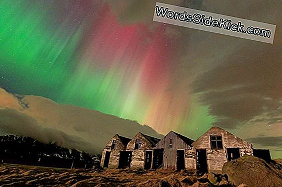 Northern Lights: 8 Datos Deslumbrantes Sobre Las Auroras