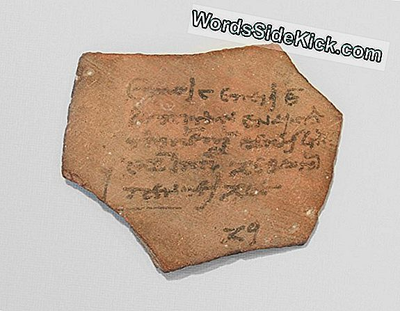 Fotod: Ancient Egyptian Tax Receipt & Muud Tekstid