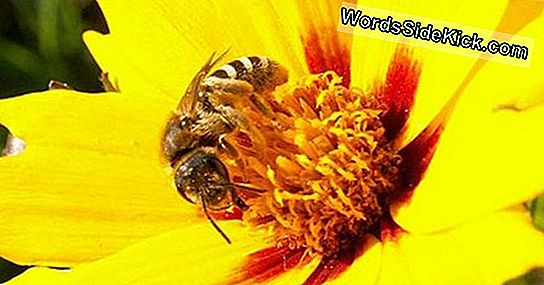 Bees Get Buzz From Flowers 'Electric Fields