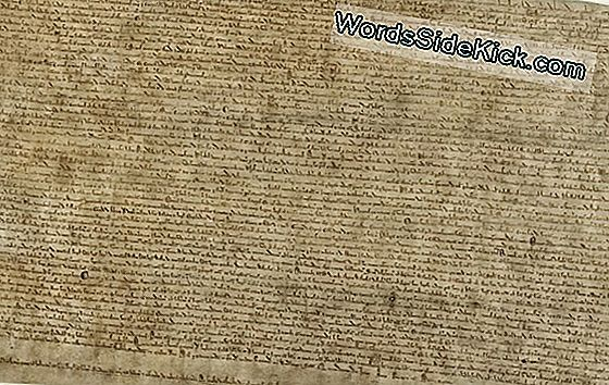 Magna Carta Läheb Ekraanile Washingtonis, D.C.