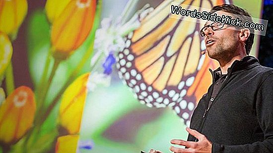 Monarch Butterflies Self-Medicate
