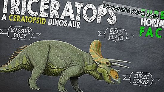 Triceratops: Facts About Three-Horned Dinosaurus