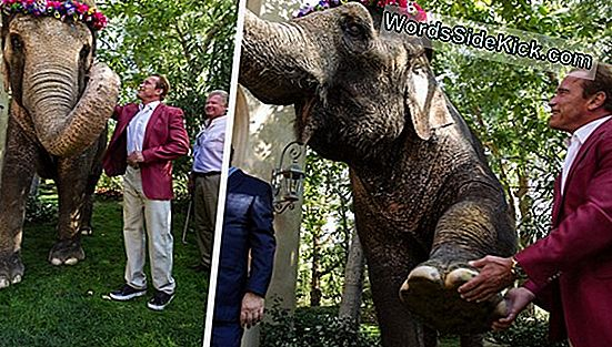 Sauver Des Éléphants: Ivory Crush À Central Park (Photos)
