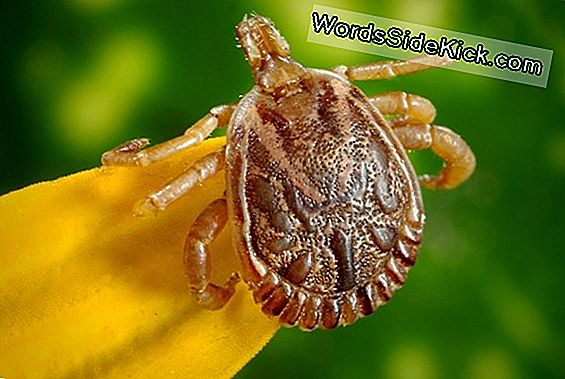 Csendes, Tick-Borne Disease On The Rise