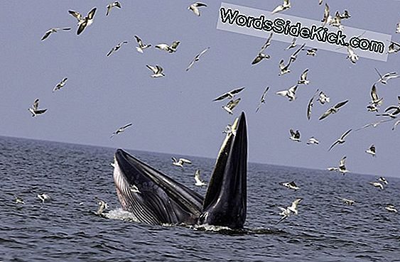 Whale Poo: The Ocean'S Miracle Grow