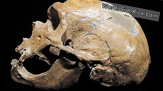 Strange Old Skull: Human Or Not?
