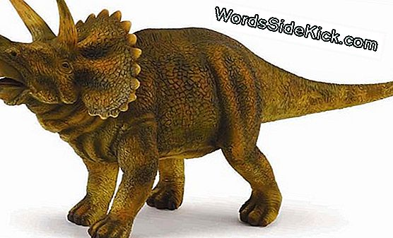 Dinosauro Humpbacked Wacky Sembrava Come La Creatura 'Star Wars'