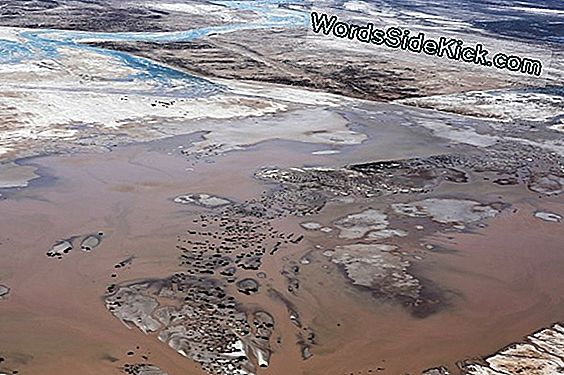 Rare Sight: Colorado River Reaches Gulf (Foto'S)