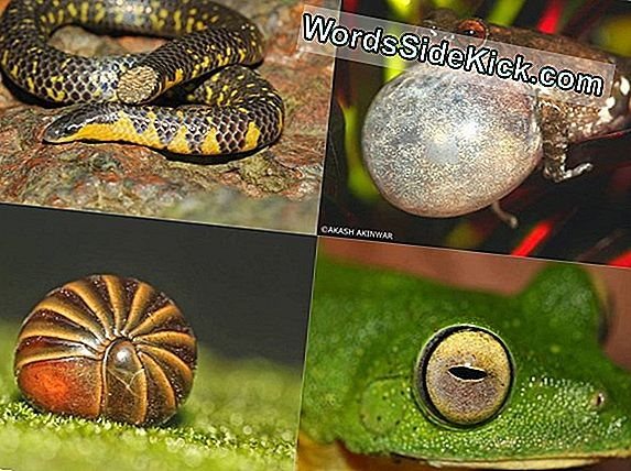 Nuove Specie Di Serpenti Colorate Scoperte