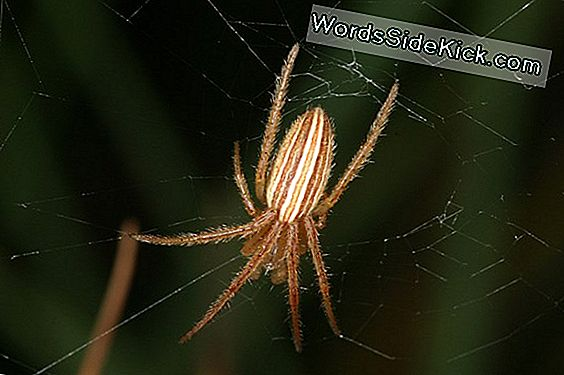 Tough Love: Male Spiders Die For Sex