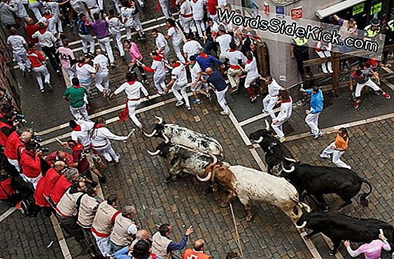 American Running Of The Bulls Not Much Of A Thrill (Op-Ed)