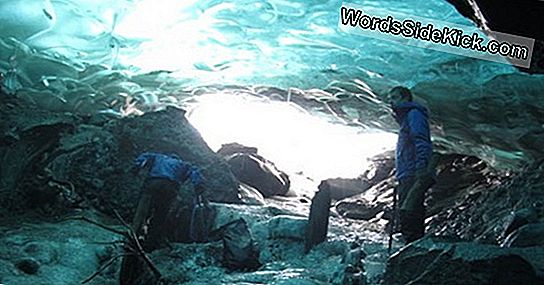 Ancient Forest Thaws From Melting Glacial Tomb