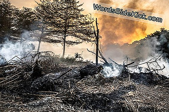 Snack Time For Predators! 6 Weird Ways Wildfires Influenzano La Foresta