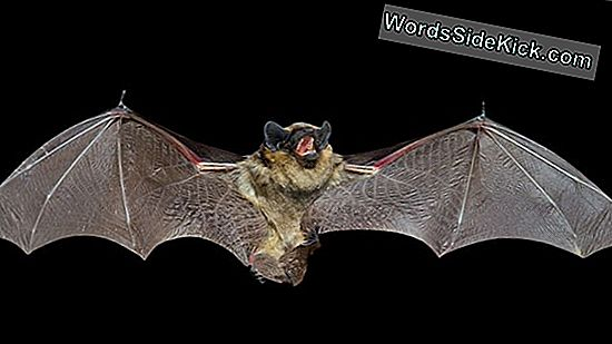 Death By Vampire Bat: How Rabies Kills