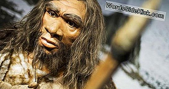 Waarom Neanderthals Sported Arms Zoals Popeye