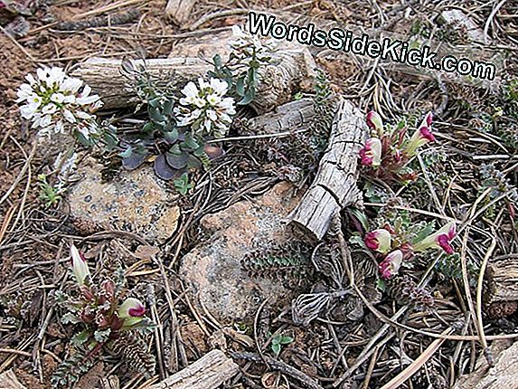 First Spring Flowers Arrive In Grand Canyon