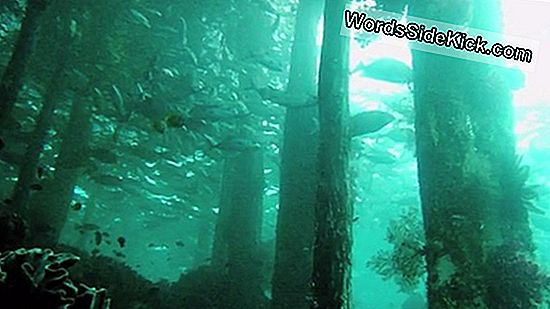 Primeval Underwater Forest Ontdekt In De Golf Van Mexico