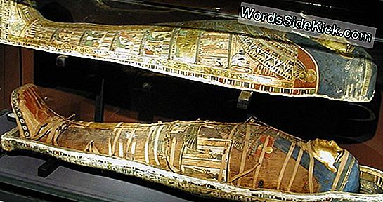 Million-Mummy Cemetery Opgegraven In Egypte