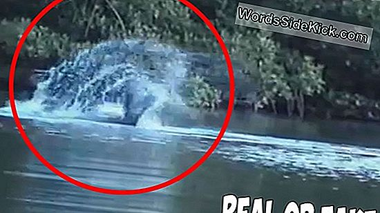 Is Het Loch Ness Monster Dead?