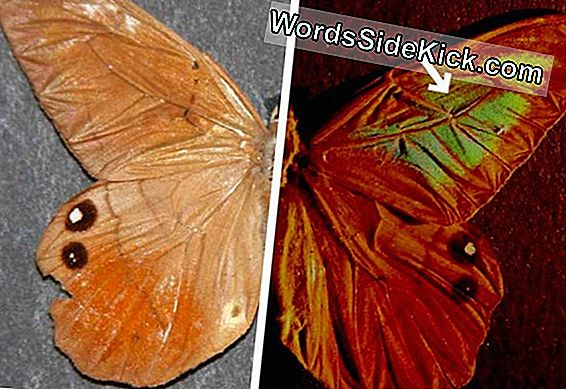 Kleurrijke Butterfly Wings Inspire Counterfeit-Proof Tech