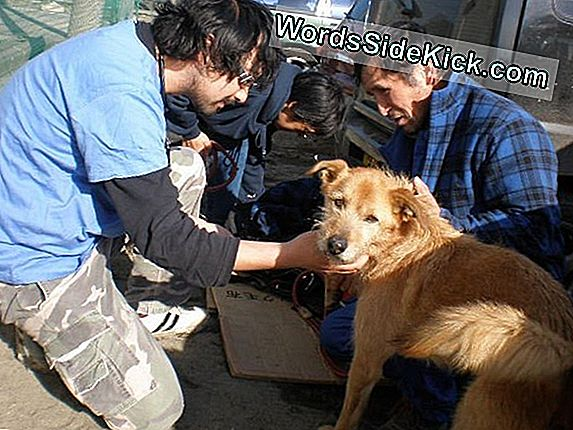 Lost Victims: Animal Groups Rush To Help Pets In Japan