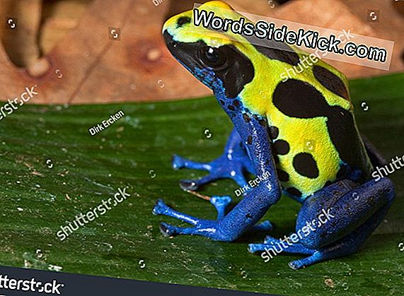 Poison Frogs Dress In Hometown Colors
