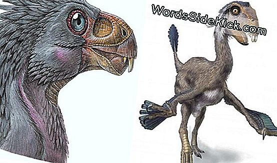 Weird Dinosaur Species Had Teeth Only In Youth