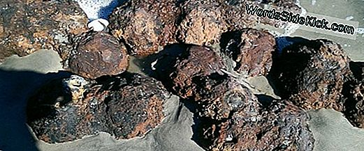 Civil War Cannonballs Uncovered Door Hurricane Zijn Gedesoneerd
