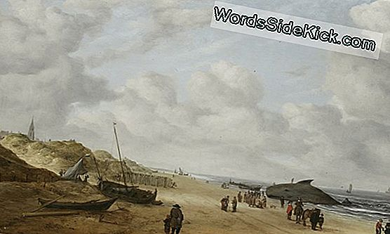 Hidden Beached Whale Revealed In 17E-Eeuwse Nederlandse Schilderkunst